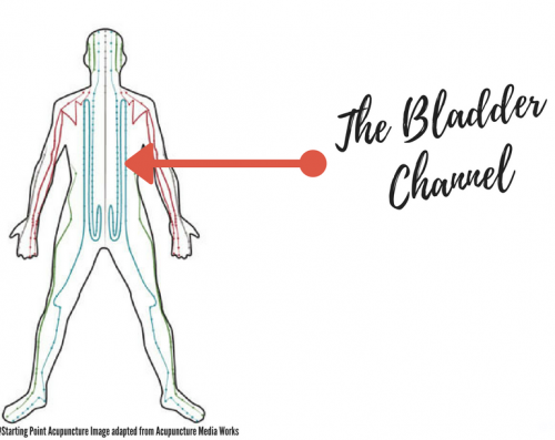 Bladder channel in Chinese Medicine